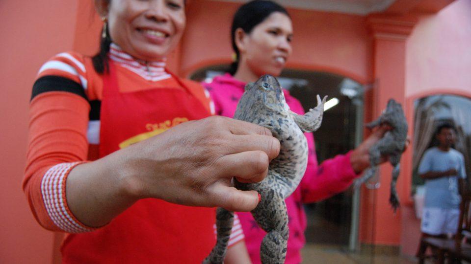 V jihovýchodní Asii jsou záby běžnou součástí jídelníčku