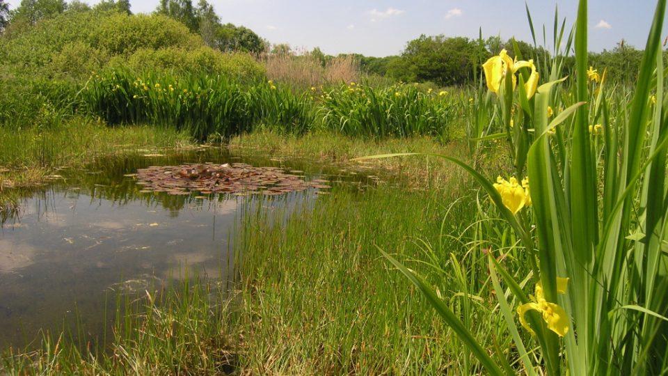 Zhruba šest kilometrů od Valašského Meziříčí se nachází obec Choryně, u které se rozprostírá několik rybníků a také pozoruhodný Choryňský mokřad