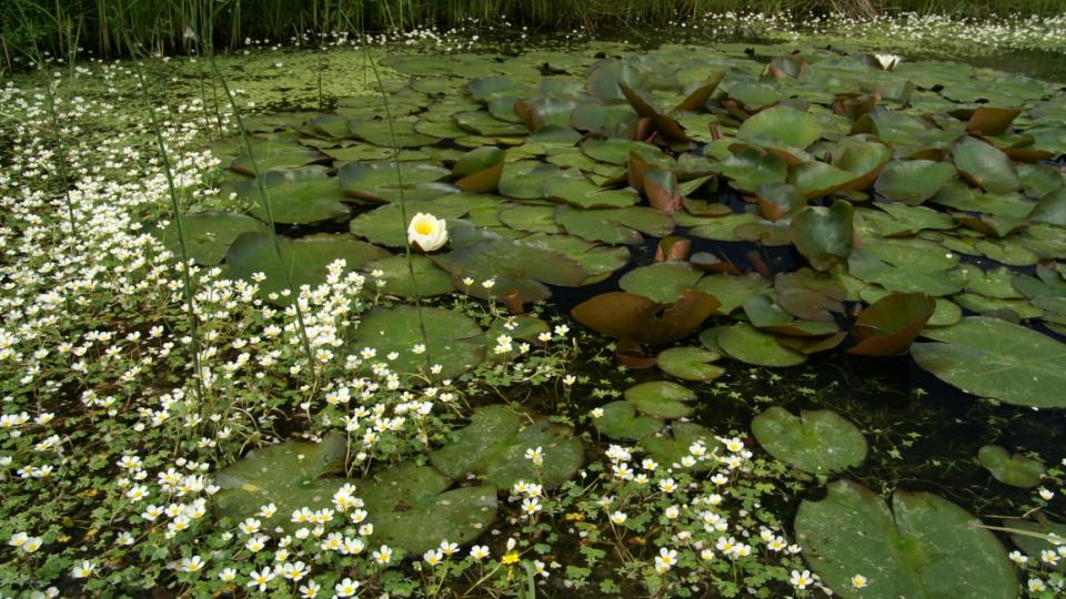 Od 90. let minulého století začali o Choryňský mokřad pečovat ochránci přírody