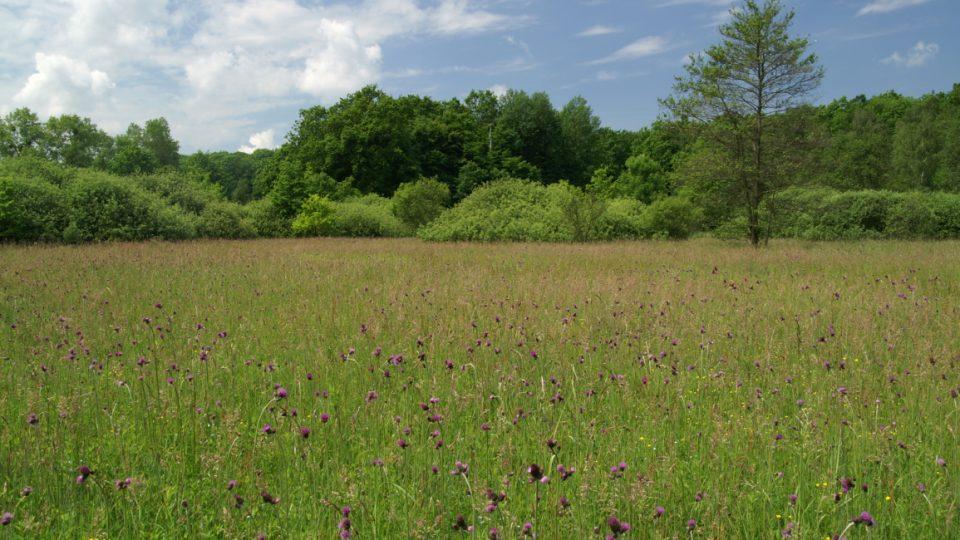 Choryňský mokřad je i ornitologickou lokalitou, k vidění jsou tam například volavky červená a bílá