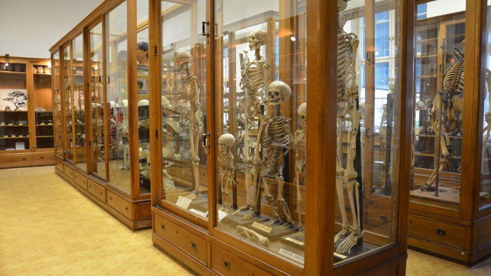 Muzeum je komorní, ale plné informací o člověku a lidských příběhů