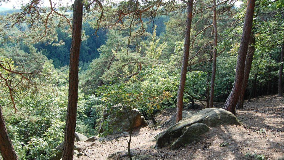 Hezké procházky si můžete užít i v místním lese