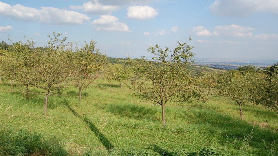 Stříbrnické paseky jsou zajímavou přírodní lokalitou nedaleko obce Stříbrnice u Uherského Hradiště ve Zlínském kraji