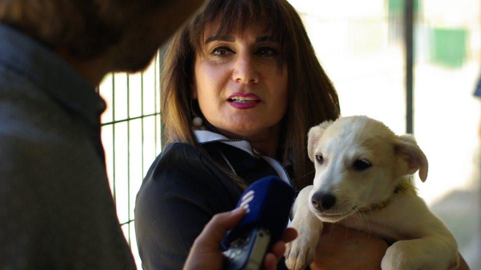 Palestinská bankéřka žijící v Betlémě opustila svou práci a založila psí útulek