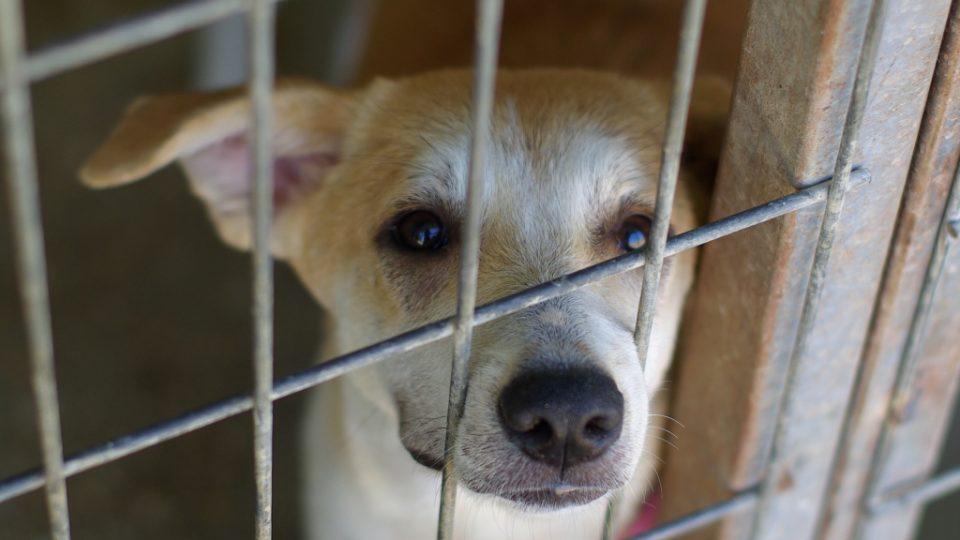 Traduje se, že pes je podle islámu nečisté zvíře. Realita není tak černobílá