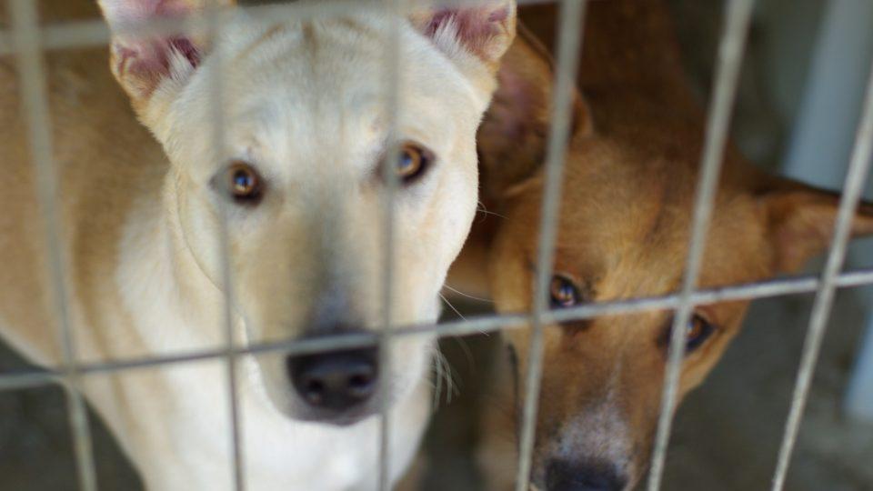 Nový domov palestinským psům nabízejí hlavně cizinci a Izraelci. Arabové o ně příliš zájem nemají