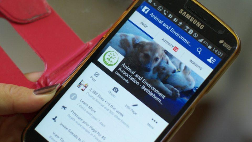 S betlémskými pejsky se můžete seznámit na facebookových stránkách útulku