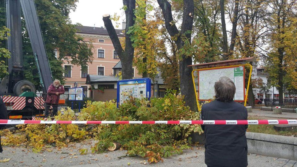 V centru Jindřichova Hradce jde k zemi devatenáct stromů. Začala dlouho plánovaná revitalizace Husových sadů