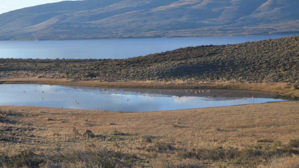 Plameňáci chilští v zátoce jezera Sarmiento