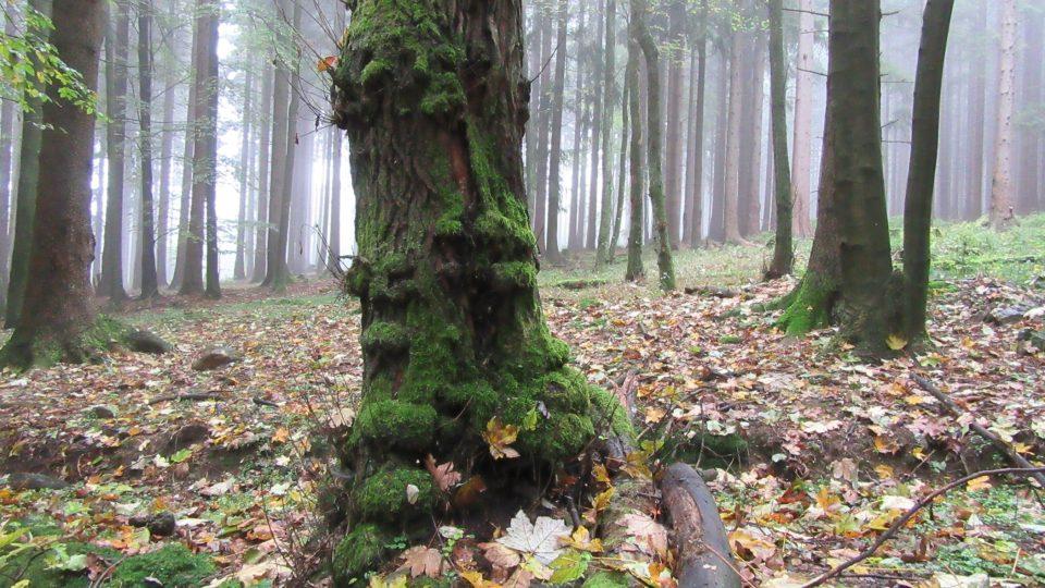 Tajemný český les