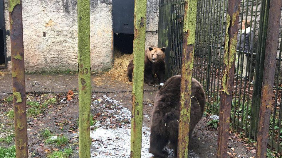 Medvěd Ludvík z náchodského zámku má zdravotní problémy. Pomohou mu odborníci?