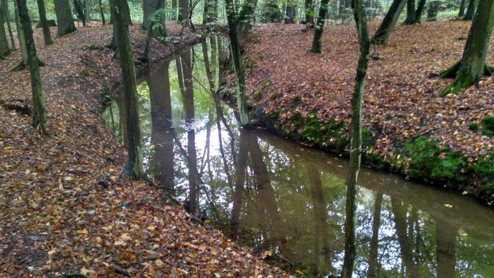 Podél Výrovského kanálu vede příjemná lesní stezka