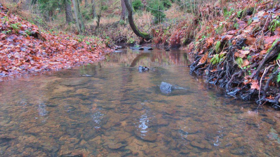 Borecký potok