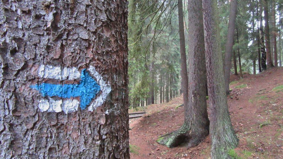 Naučná stezka Cestou divočiny je součástí modré trasy KČT