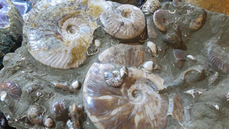 V expozici nerostů v Zámrsku najdete celou řadu prvohorníh a druhohorních zkamenělin, většina pochází z nalezišť v Maroku