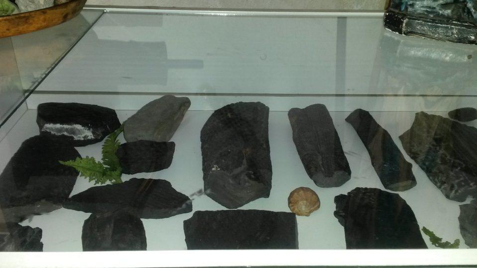 Otisky dávných rostlin a živočichů v ostravském uhlí