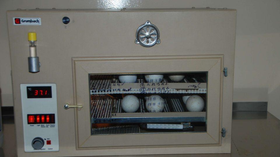 Inkubátor (nejen) pro pelikány