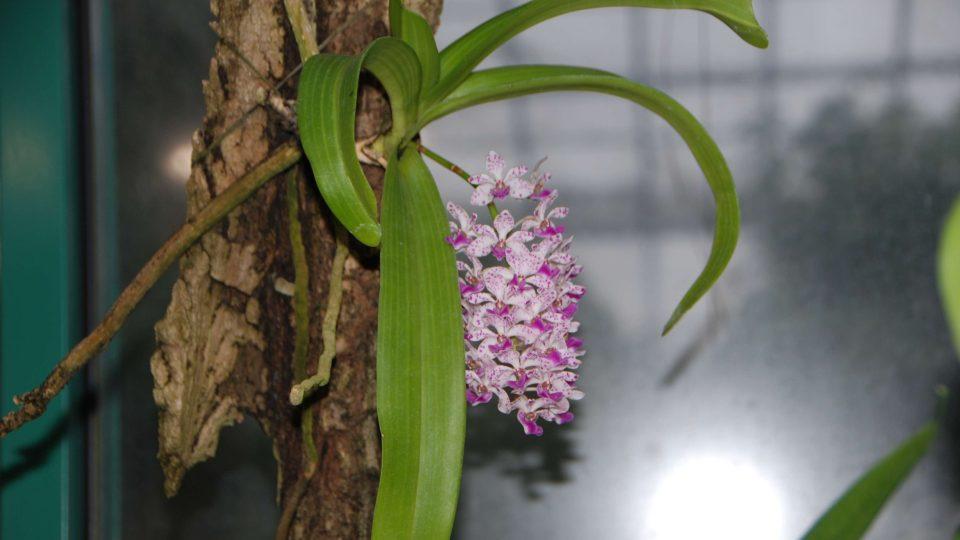 Liberecká botanická zahrada vystavuje sbírku unikátních orchidejí