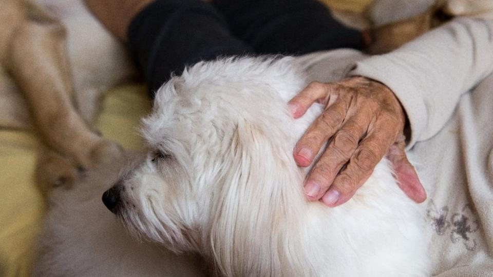 Canisterapie v plzeňské Domovince