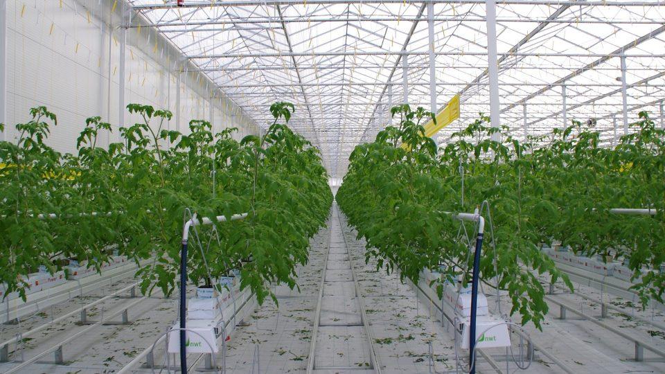 Tyto rostliny jsou zárukou budoucí sklizně