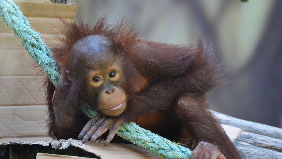 Dvorská ZOO se připojuje ke Dni bez palmového oleje