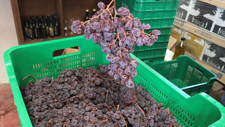 Ze zdejších hroznů se ale nelisuje víno – suší se na rozinky