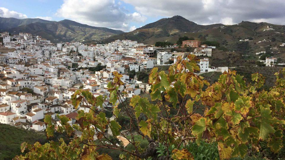 V andalúském Almácharu se skoro každá rodina věnuje pěstování vinných hroznů na výrobu rozinek