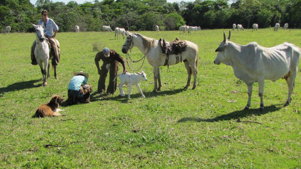 Farma paní Dolores Baťové v brazilském státě Mato Grosso do Sul