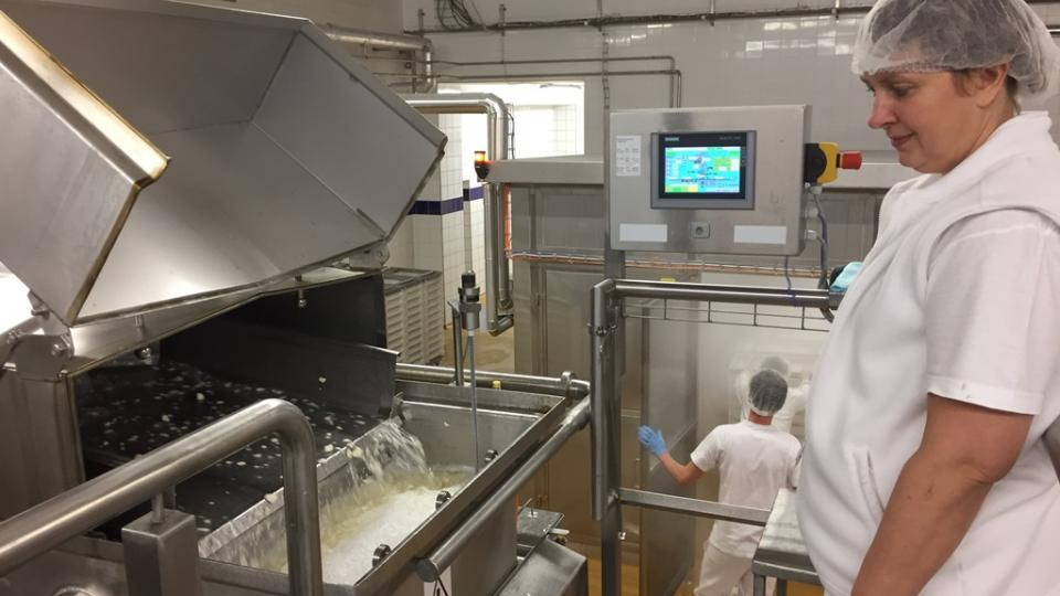 Výroba sýrů v mlékárenském podniku Madeta v areálu v Plané nad Lužnicí