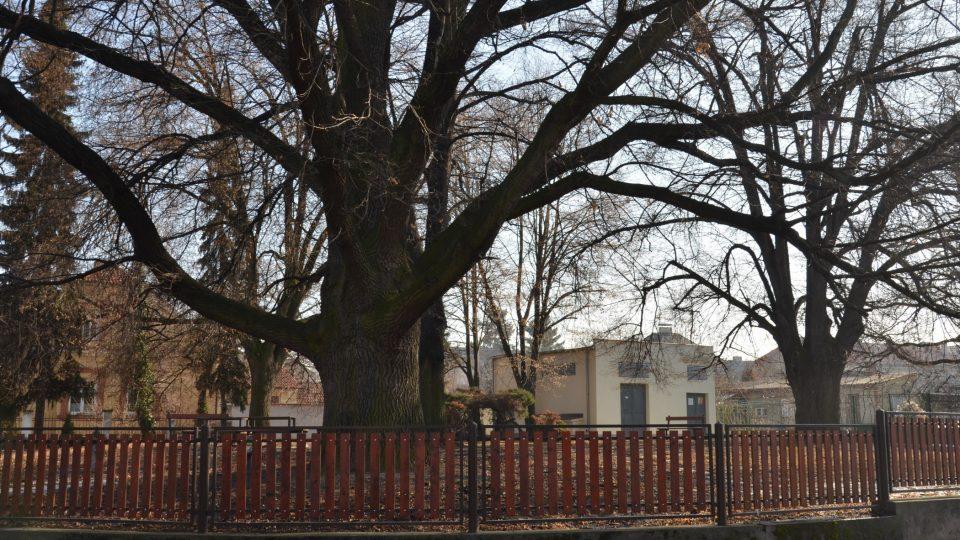 Parčík naproti domu Formanových, kde malý Miloš Forman lezl po stromech