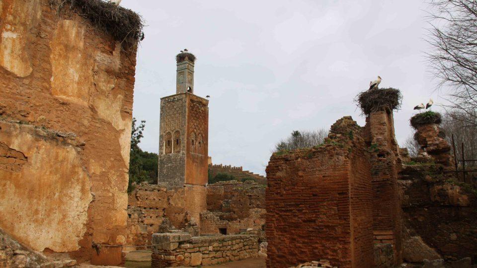 Čápi osídlili celý areál historického města