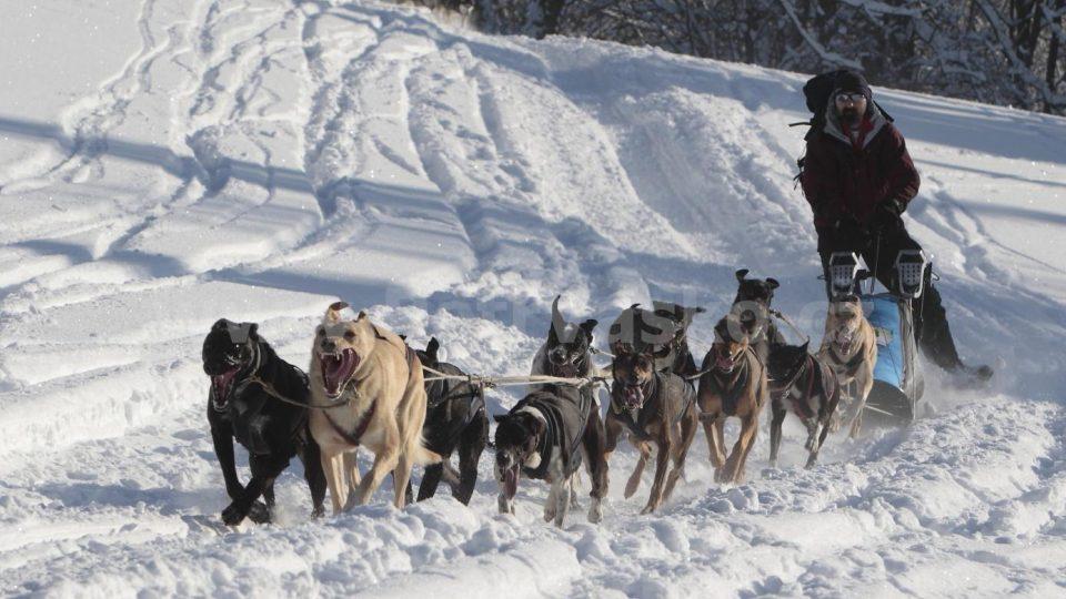 Aleš Pícl, zkušený musher a ředitel expedičního závodu Ledová jízda - Memoriál Dr. Václava Vojtěcha