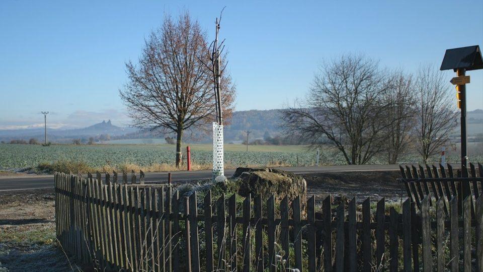 Výmladek Semtinské lípy v krajině otevřené k hradu Trosky