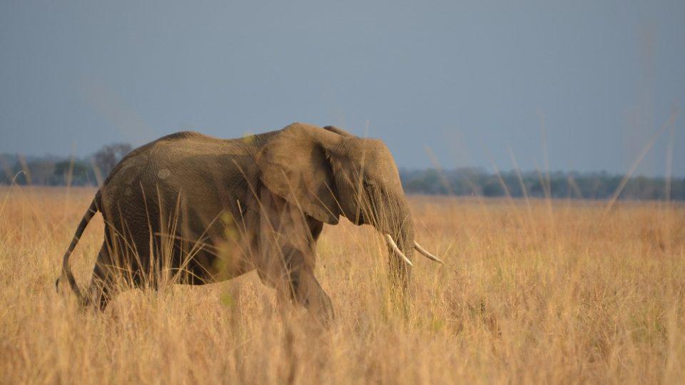 Dva roky prázdnin v Tanzanii - Mikumi NP