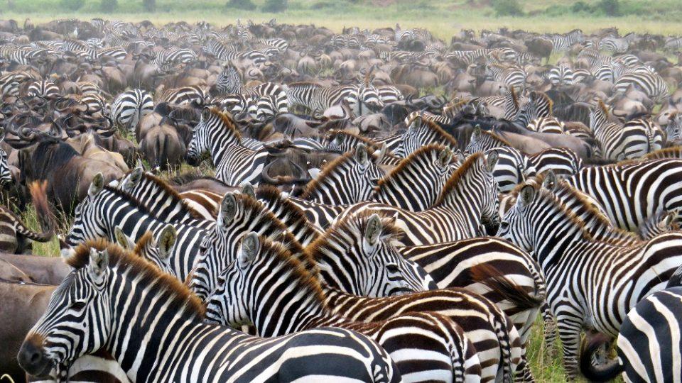 Dva roky prázdnin v Tanzanii - Serengeti