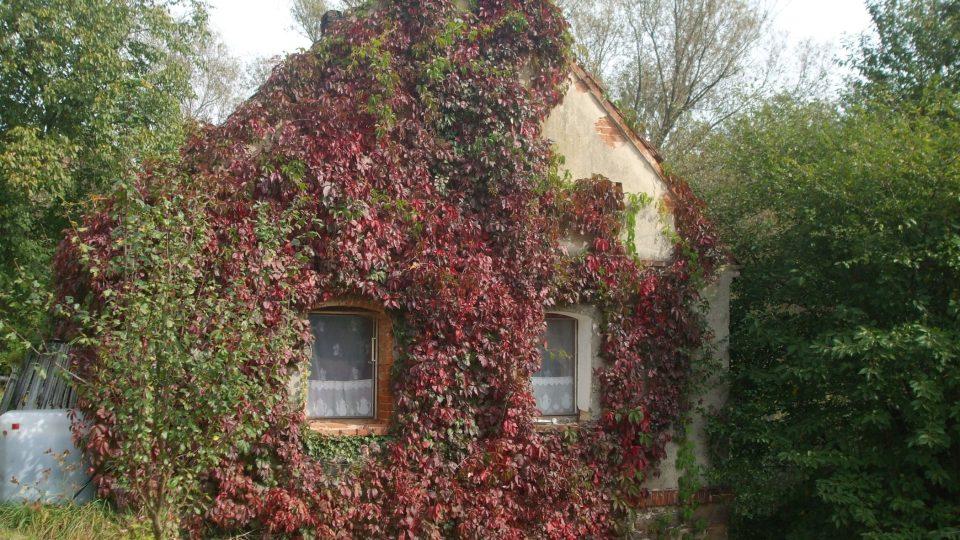 Některé domy vypadají, že jsou pod nadvládou rostlin