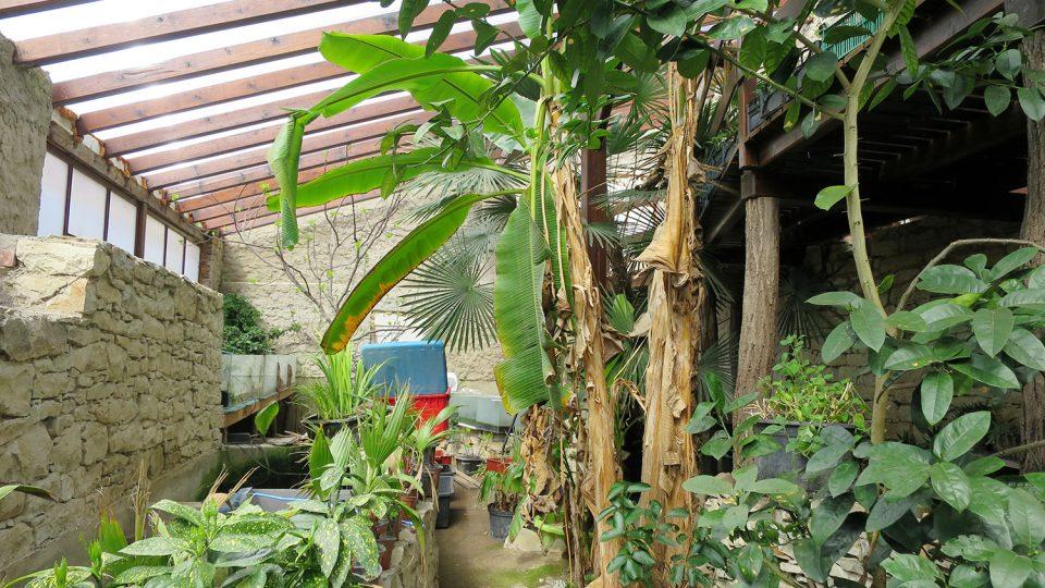 Tropické a subtropické želvy potřebují vhodné prostředí
