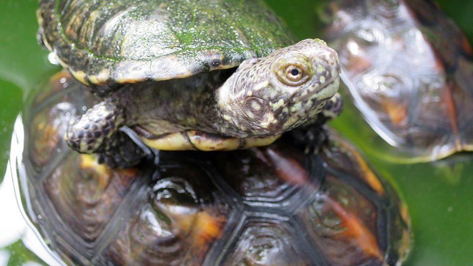 V Zahradě Harta žije přes padesát druhů želv