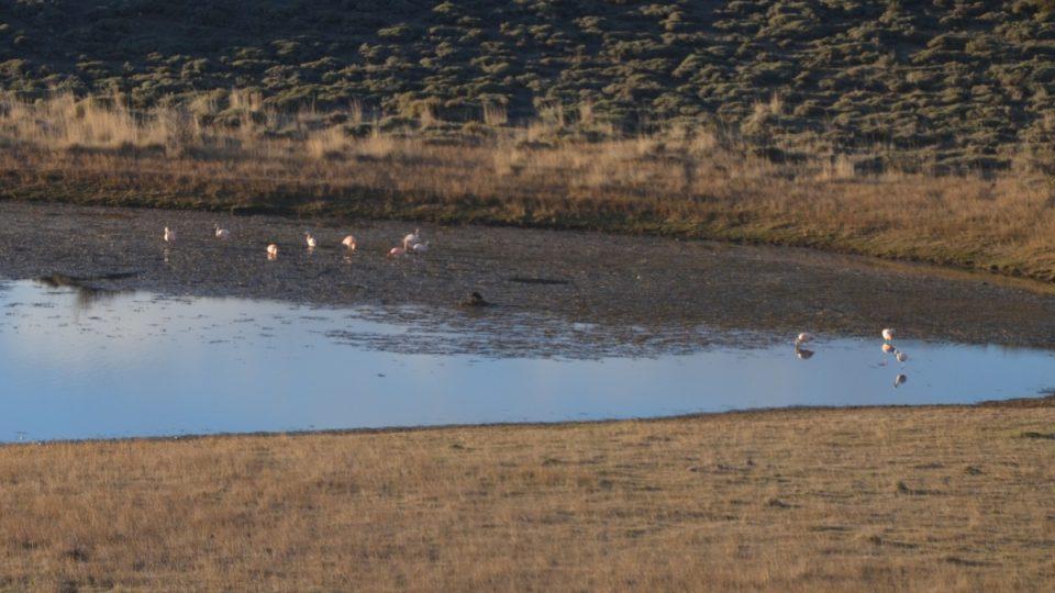 V chladném podnebí Patagonie žijí plameňáci