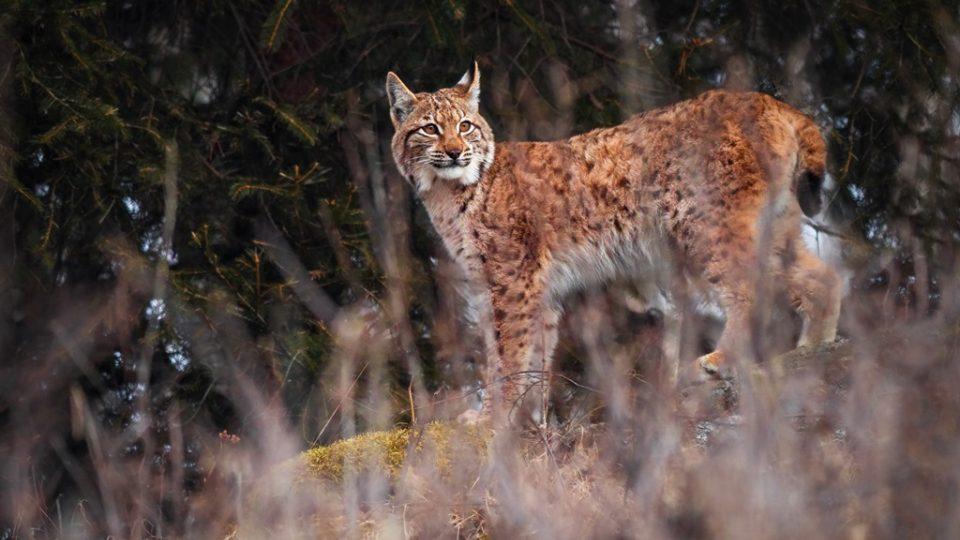 Fotografie Marka Drhy ze šumavské přírody