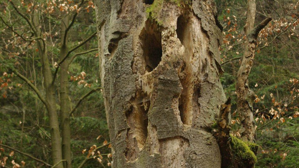 Umírající strom na cestě do Fortny umocňuje ponurou atmosféru