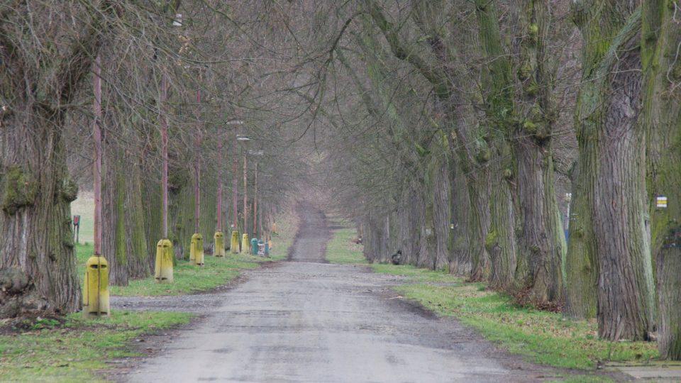 Z okružní cesty kolem zámku vybíhají do čtyř stran cesty lemované lipovou alejí