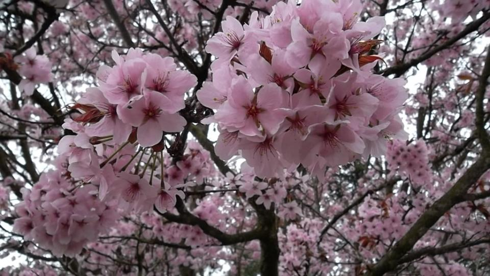 Procházka rozkvetlým arboretem v Novém Dvoře