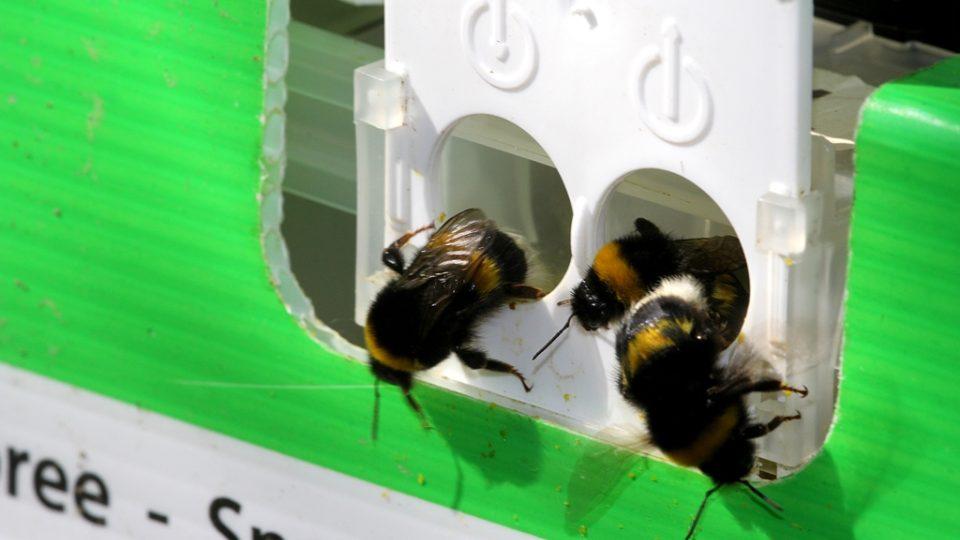 Čmeláci pracují v chladném počasí a navíc se dají přenášet do dalších sadů, což nejde u včel