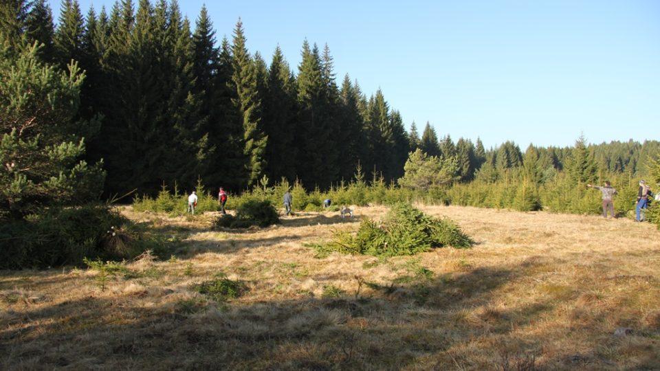 Odstraňování dřevin a obnova bezlesí v Kepelském Zhůří