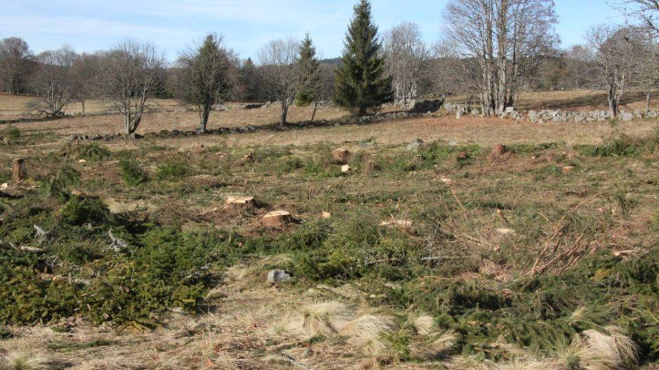 Odstraňování dřevin a obnova bezlesí na Knížecích Pláních