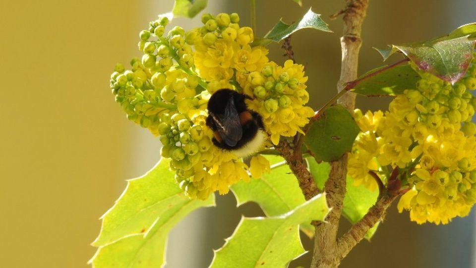Snímek z fotografické soutěže pořadu Zelené světy - téma Kvetoucí keře. Zaslala Zdeňka Kroulíková