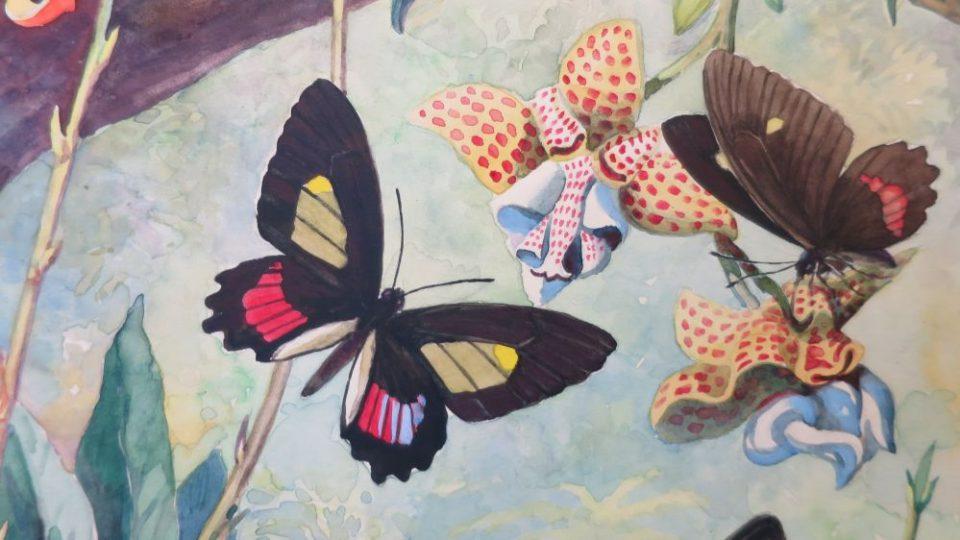 RNDr. Bohuslav Mocek - O motýlech a lidech. Vernisáž nové výstavy propojující exponáty tropických motýlů z počátků muzejnicví v Hradci Králové a osoby malíře Otakara Řípy a vědce dr. Vladimíra Balthasara