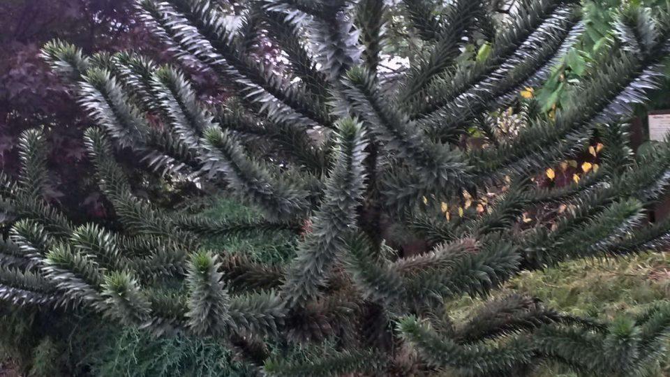 Zahrada pana Reka je plná botanických zajímavostí