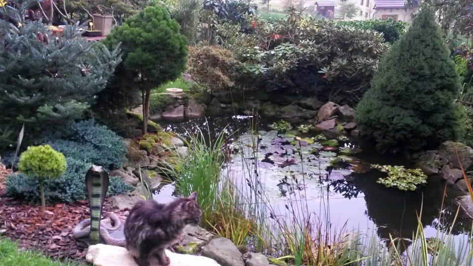 Jezírko asijské zahrady stráží živá kočka a neživá kobra